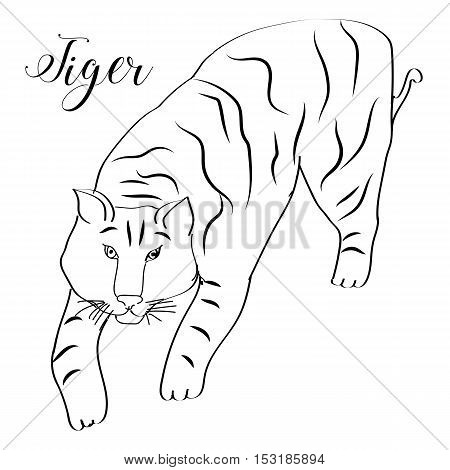 Hand drawn vector tiger with the text