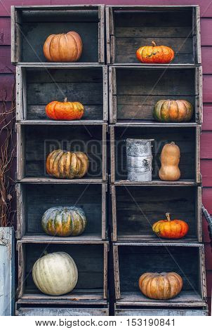 Fresh harvest ten farm yellow orange pumpkins with unusual funny curvy shape form on wooden shelf furniture boxes with copy space for text Halloween Thanksgiving concept closeup