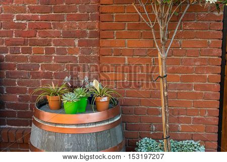 Tree and flowers in front of a brick wall
