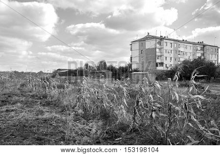 Corn on building background. Black and white photography
