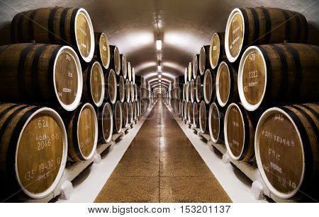 Rows of wine barrels in an underground vault