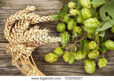 Malt and hops