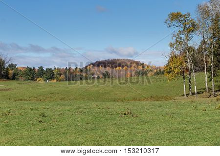 A forest landscape in the fall season