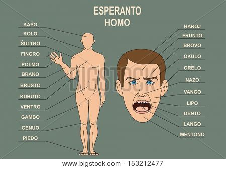 Anatomical diagram for the study of the language Esperanto. The human body, a human head.