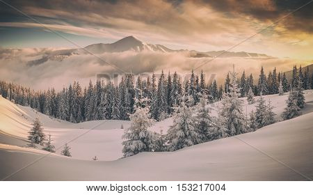 Fantastic orange evening landscape glowing by sunlight. Dramatic wintry scene with snowy trees. Kukul ridge, Carpathians, Ukraine, Europe.Toned like Instagram filter