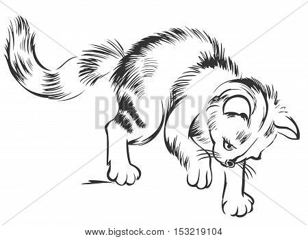 Black and white sketch of a little kitten. Drawing made on computer by graphic tablet. Vector  image.