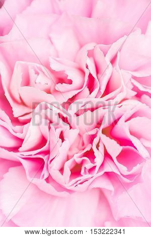 Macro of pink flower for background, nature abstract concept,nature abstract background,shallow depth of field.