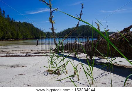 A hiker enjoys a gorgeous sandy beach in a lagoon in the Great Bear Rainforest on a sunny day.