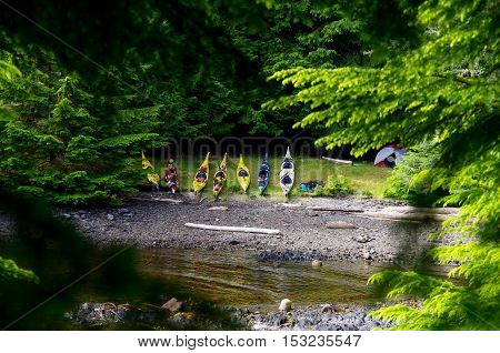 Sea kayaks pulled up on a grassy shore seen through the branches of trees.