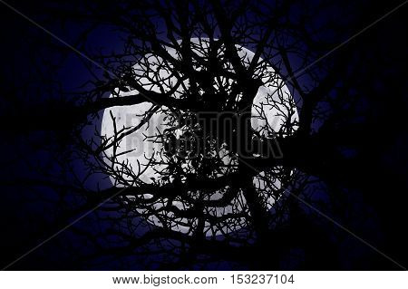 halloween or ghost style The moon is behind the shadows of twigs on empty dark sky at night blue tone