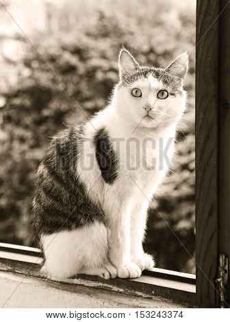 male cat black and white sepia portrait on the balkony