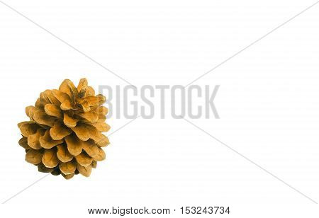Brown Pine Cones Isolated On White Background.
