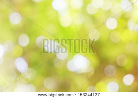 green bokeh with sun light blur abstract background.