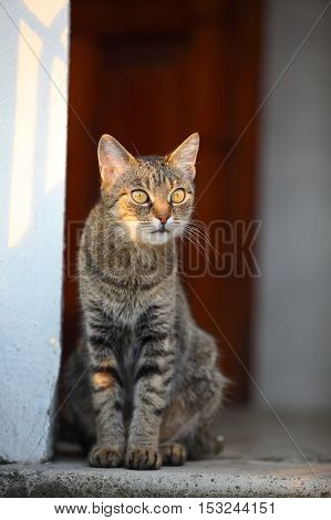 domestic cat looking into the distance. Shallow depth of field