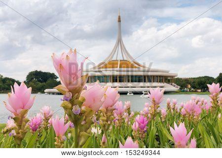 Siam tulip on the Thai architectural museum background.