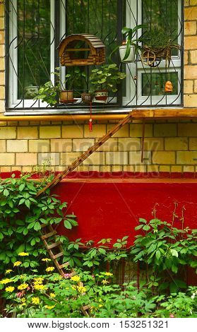 special self made ladder way to the window leaf for cats close up photo