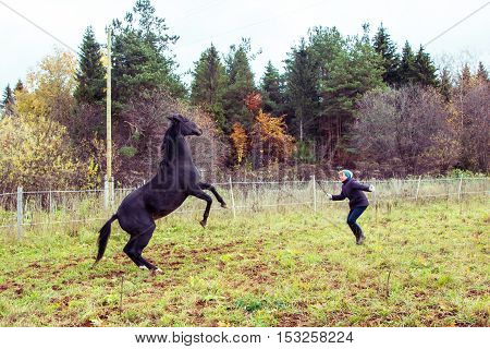 Horse And Girl Outdoors In An Autumn Day