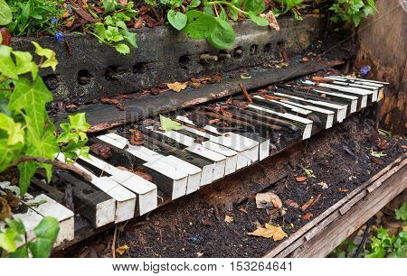 Piano left to rot and become overgrown with plants
