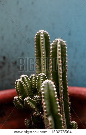close up cactus in pot on dirty texture background