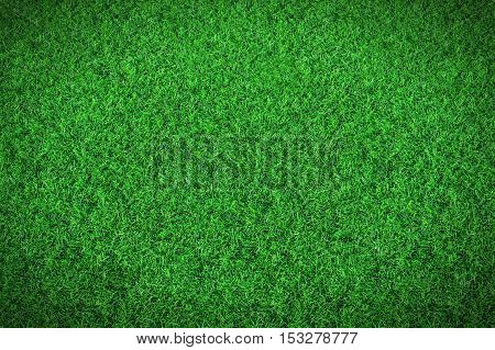 Green grass background, Natural background texture. 3D illustration