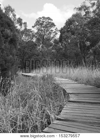Timber board walk along a rural creek through bush and wetland in the late afternoon sun Victoria Australia 2016