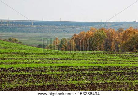 Tillage. The Preparation Of Land For Growing Crops. Green Strips, Bad Collected Wheat