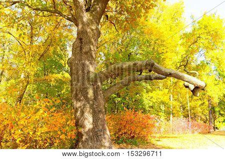 Foliage Beauty Fall Wallpaper