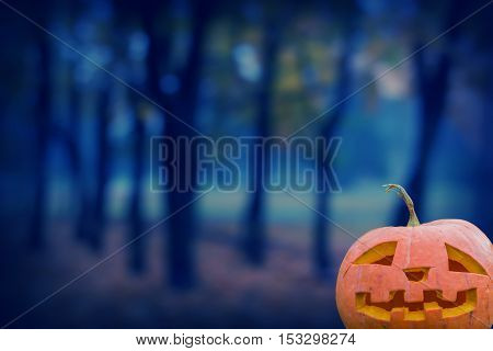 pumpkin on a background of the evening forest