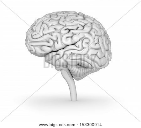 Human brain 3D model. Medically accurate 3D illustration