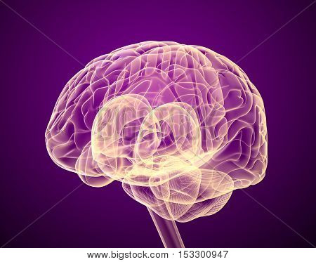 Human brain X-ray scan Medically accurate 3D illustration