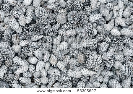 Winter texture of many white pine cones closeup.