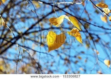 Photos in the Park Sunny weather. Autumn