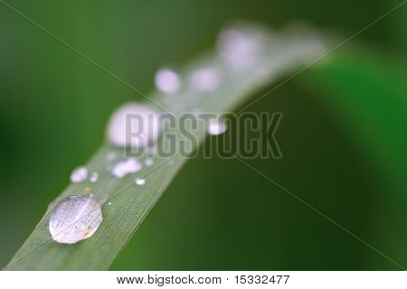 Dewdrops on a blade of grass