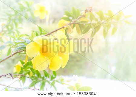 Yellow flowers natural summer background blurred image selective focus.