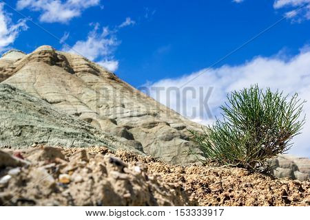tree sprout in the desert against the white mountains. cloudy sky