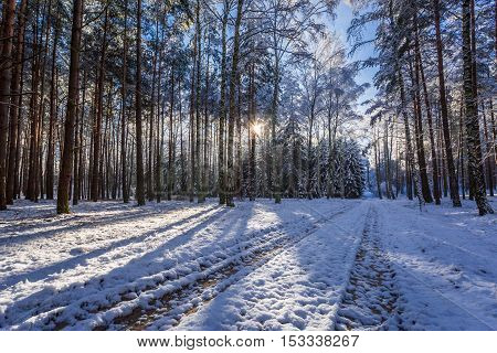 Frozen forest at sunset in winter, Poland