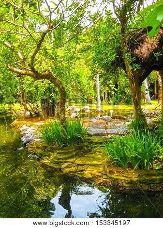 The Bird park at Bali island at Indonesia. white flamingo