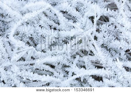 White Frost Crystals Cover Grass