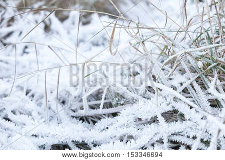 White Frost Covers Green Grass