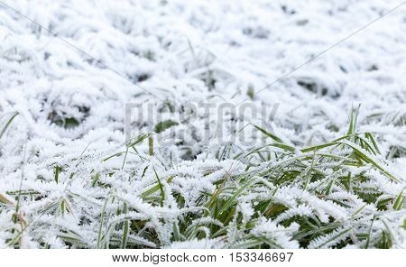 Fresh White Frost Covers Green Grass