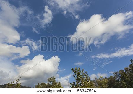 Blue sky and tree background with white clouds