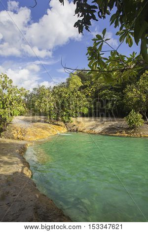 Beautiful forest and pond in sramorakodKrabi Thailand