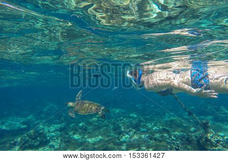 Snorkeling with sea turtle. Sea turtle in blue water over coral reef Philippines Apo island. Olive ridley turtle in sea. Sea turtle picture with girl swimming underwater. Snorkeling with sea animal