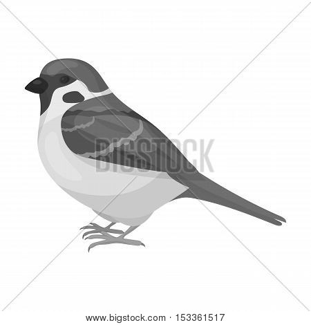 Sparrow icon in monochrome style isolated on white background. Bird symbol vector illustration.