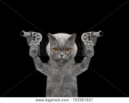 Cat with guns is murderer - isolated on black