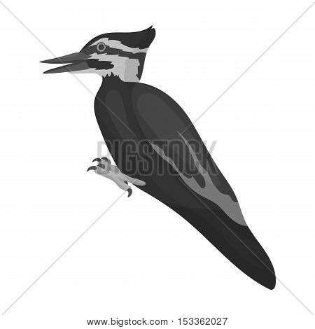 Woodpecker icon in monochrome style isolated on white background. Bird symbol vector illustration.