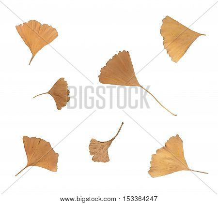 Isolated Autumn Tree Leaves On Empty Background