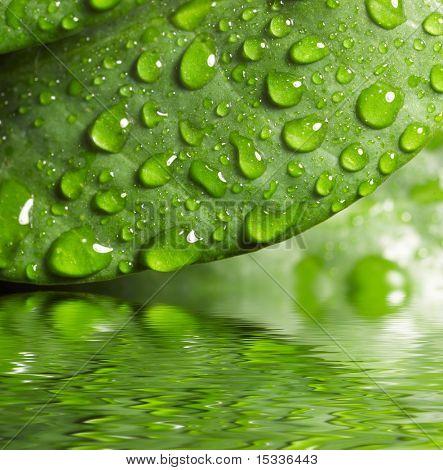 Grün Leaf mit Waredrops spiegelt sich in th Wasser