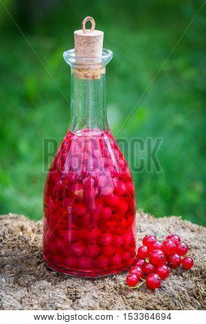 Homemade Liqueur Made Of Redcurrants And Alcohol