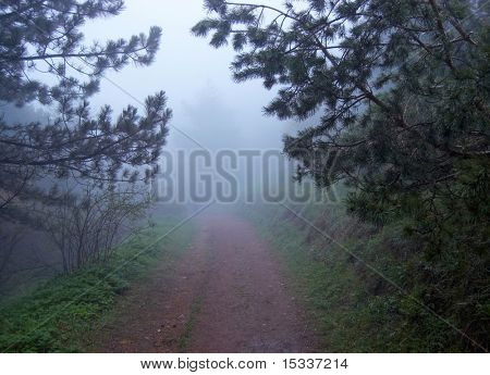 Mystic foggy forest road